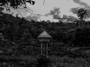 Ayahuasca center in the Amazon
