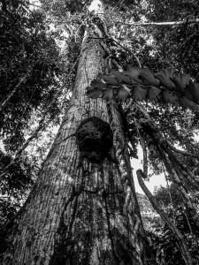 A tree tumor